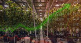 marijuana stocks (CGC stock)