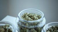 cannabis stocks to buy