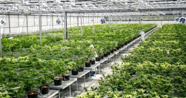 top marijuana stocks